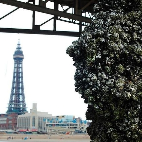 Blackpool Tower - Identity Photogr@phy