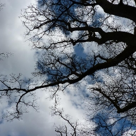 the bare branches of trees in spring - Martoneofmany