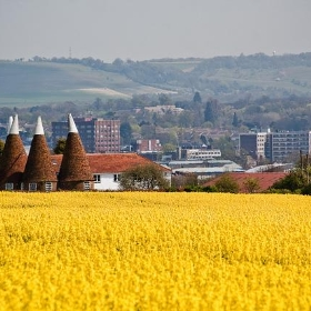Maidstone from oilseed field - llamnudds