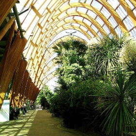 Sheffield Winter Garden - SteveR-