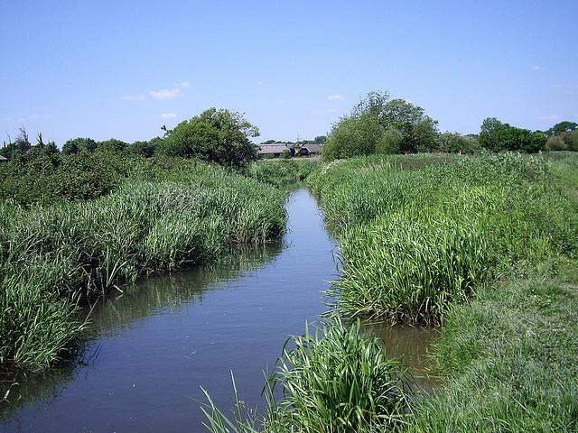 Stream by Titchfield Haven