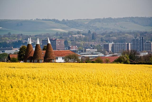 Maidstone from oilseed field